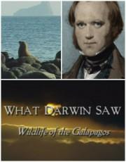 Что увидел Дарвин. Животный мир Галапагоса / What Darwin Saw. Wildlife of the Galapagos