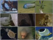 BBC: Брачные игры в мире животных / Battle of the Sexes (6 фильмов)