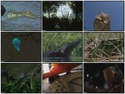 BBC: Живые драконы / Dragon alive (3 фильма)