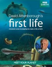 BBC: Первая жизнь с Дэвидом Аттенборо / David Attenborough's First Life (2 фильма)