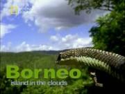 National Geographic: Первозданная природа. Борнео — остров дикой природы / Borneo. Island in the clouds
