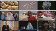 BBC: Тайны мозга. Всё проходит через мозг / BBC: Brain Story (фильм 1)