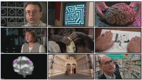 BBC: Тайны мозга. Первый среди равных / BBC: Brain Story (фильм 4)