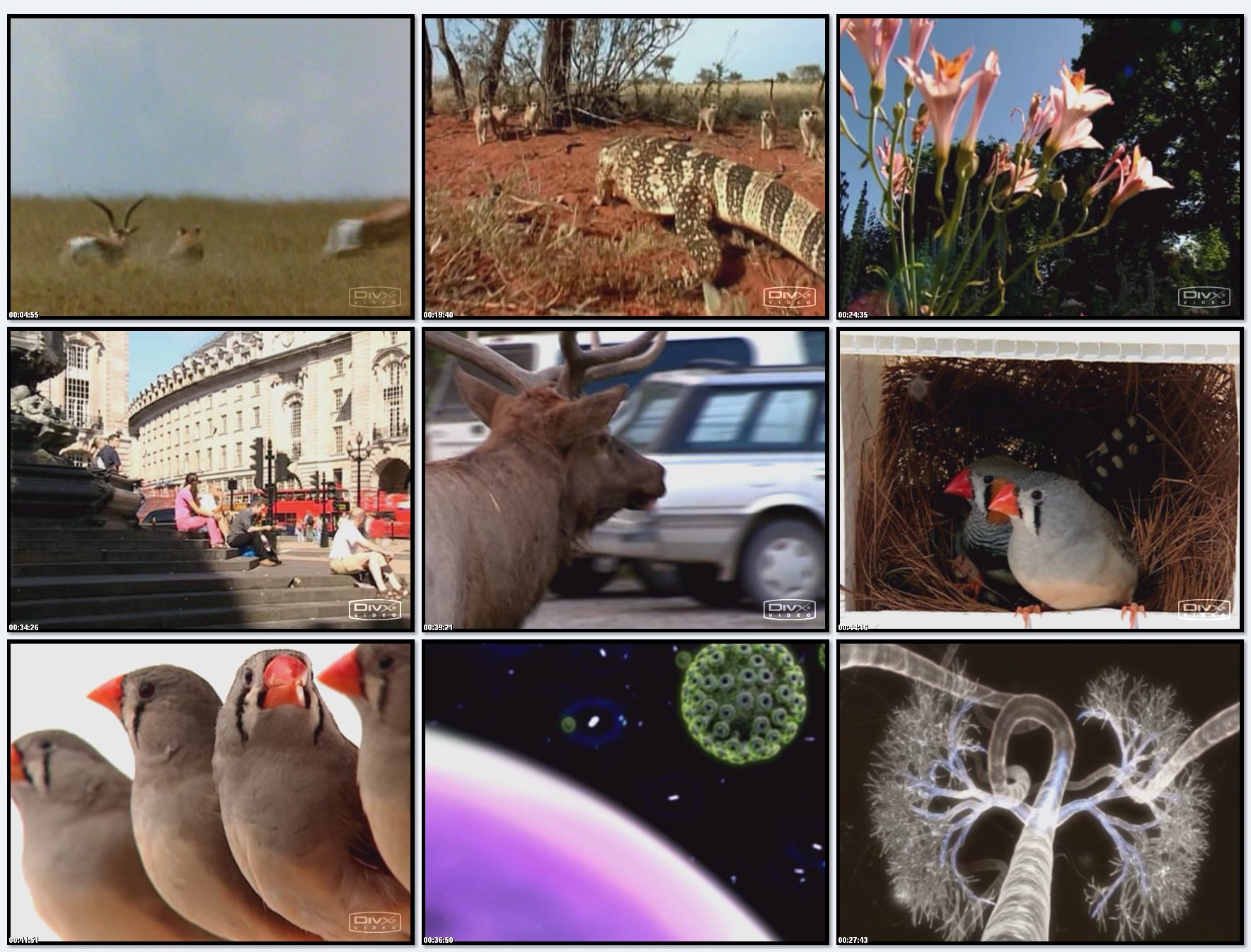 BBC: Эволюция Жизни. Жизнь вместе (фильм 4) / BBC: Journey Of Life