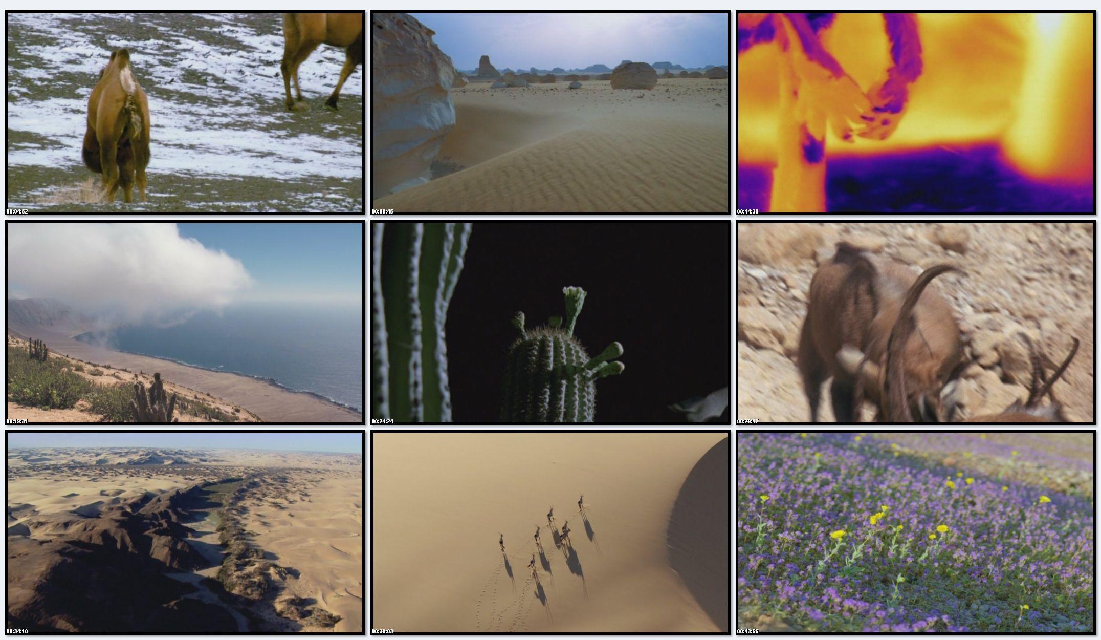 BBC: Планета Земля - Пустыни (фильм 5)