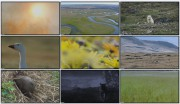 BBC: Планета Земля — Великие равнины (фильм 7) / Planet Earth — Great Plains / HDTV , DVDRip