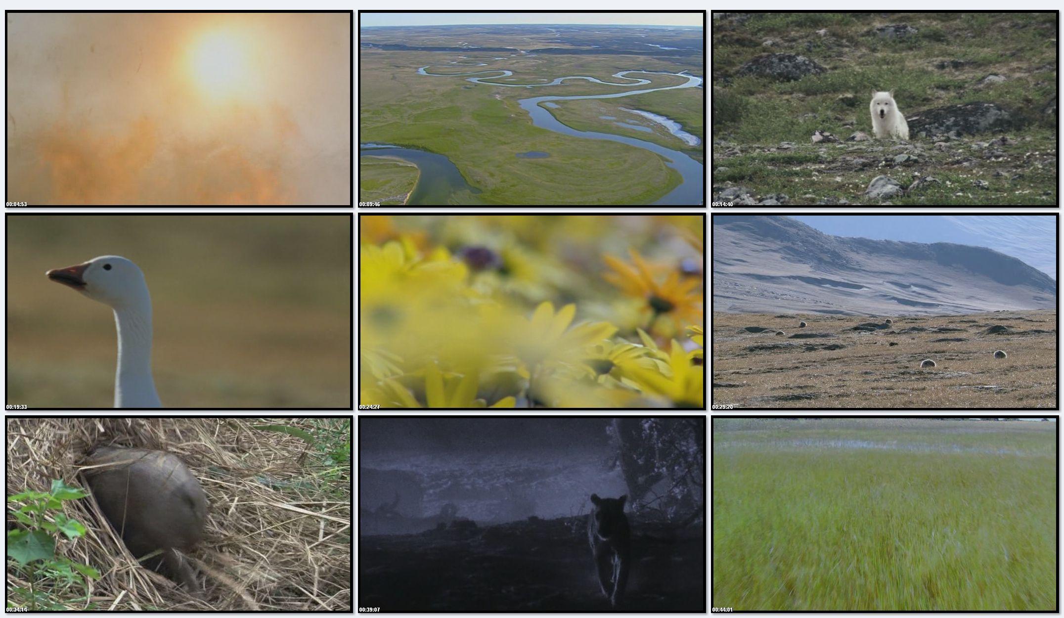BBC: Планета Земля - Великие равнины (фильм 7)