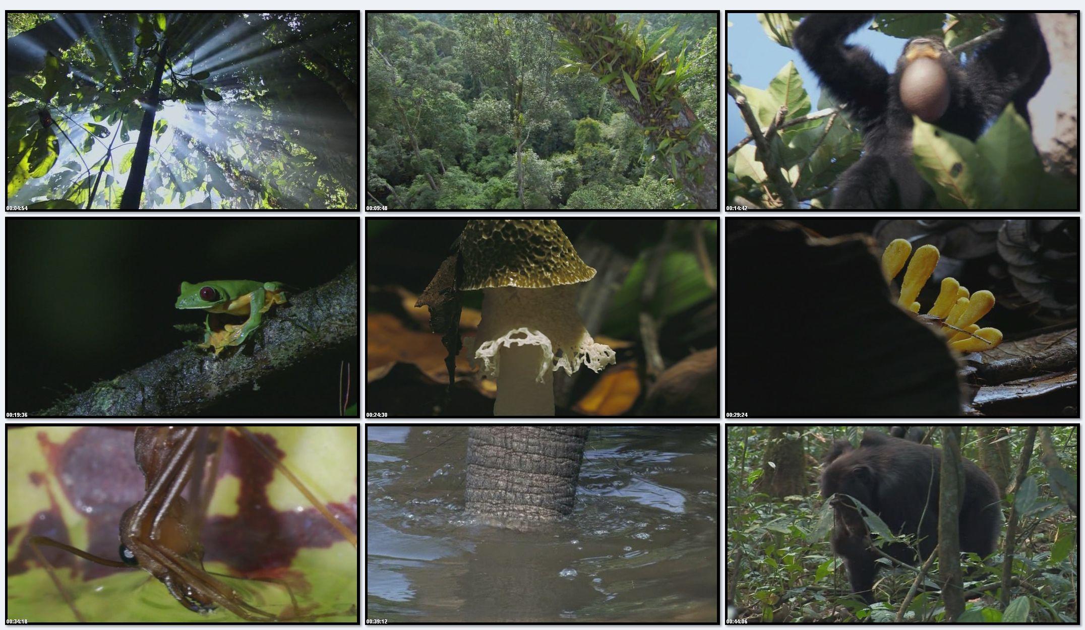 BBC: Планета Земля - Джунгли (фильм 8)