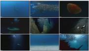 BBC: Планета Земля — Глубины Океанов (фильм 11) / Planet Earth — Ocean Deep / HDTV, DVDRip