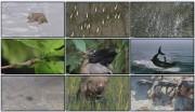 BBC: Планета Земля — От полюса к полюсу (фильм 1) / Planet Earth — From Pole to Pole / HDTV , DVDRip