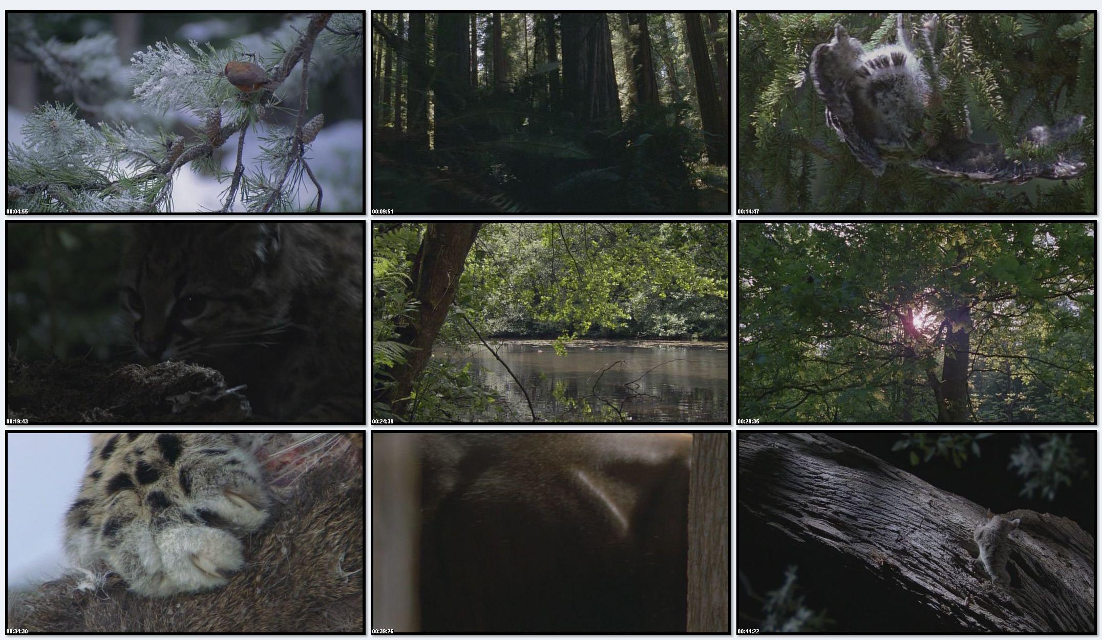 BBC: Планета Земля - Сезонные Леса (фильм 10)