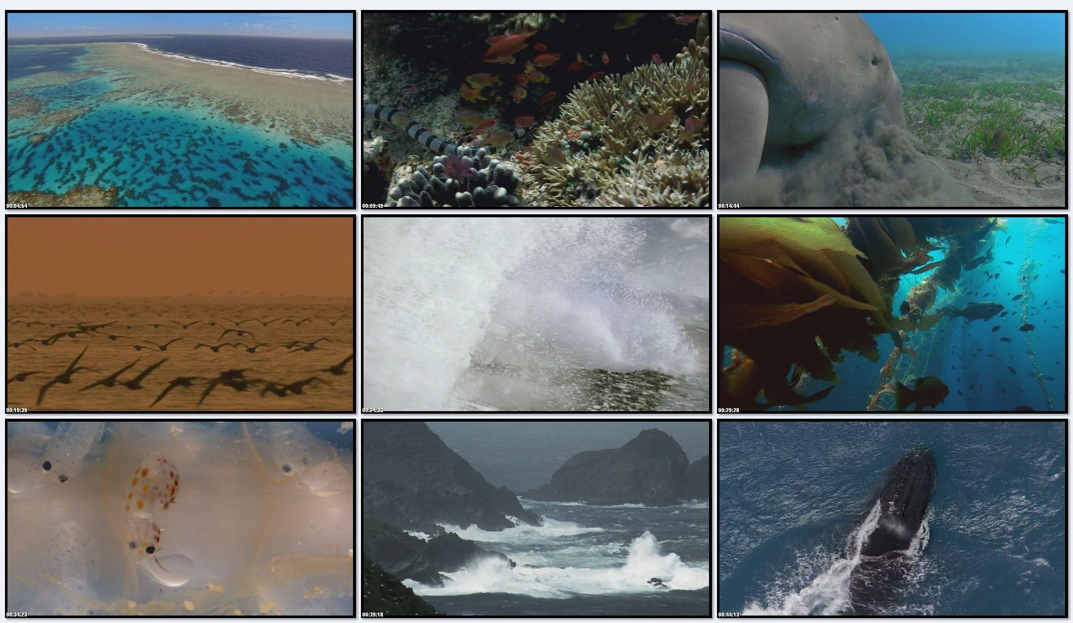 BBC: Планета Земля - Мелководные Моря (фильм 9)