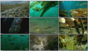 BBC: Голубая планета. Сезонные моря / The Blue Planet. Seasonal Seas (Фильм 5)