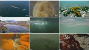 BBC: Голубая планета. Приливные моря / The Blue Planet. Tidal Seas (Фильм 7)