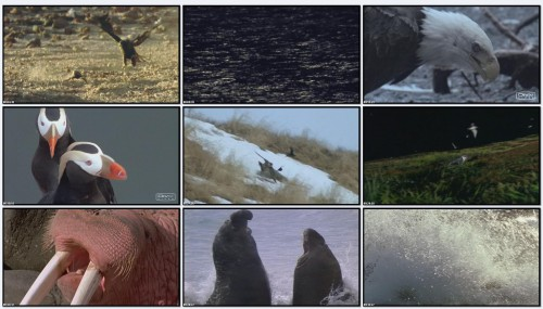 BBC: Голубая планета. Побережье / The Blue Planet. Coasts (Фильм 8)