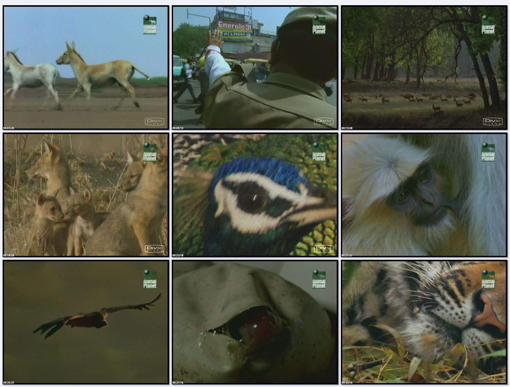 BBC: Дикая Индия - Земля тигра (фильм 1) / Wild India