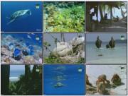 BBC: Дикая Индия — Таинственные моря (фильм 3) / Wild India