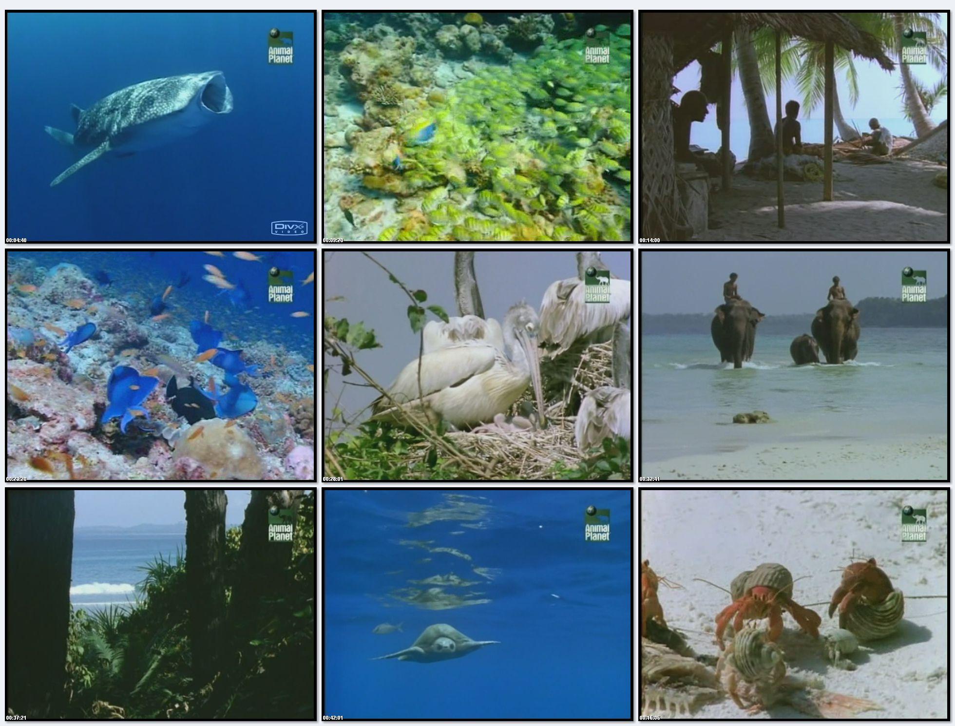 BBC: Дикая Индия - Таинственные моря (фильм 3) / Wild India