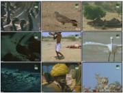 BBC: Дикая Индия — Царство пустыни (фильм 4) / Wild India