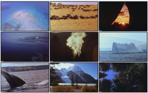Очарование природой / Fascinating Nature (1996 / фильм первый)
